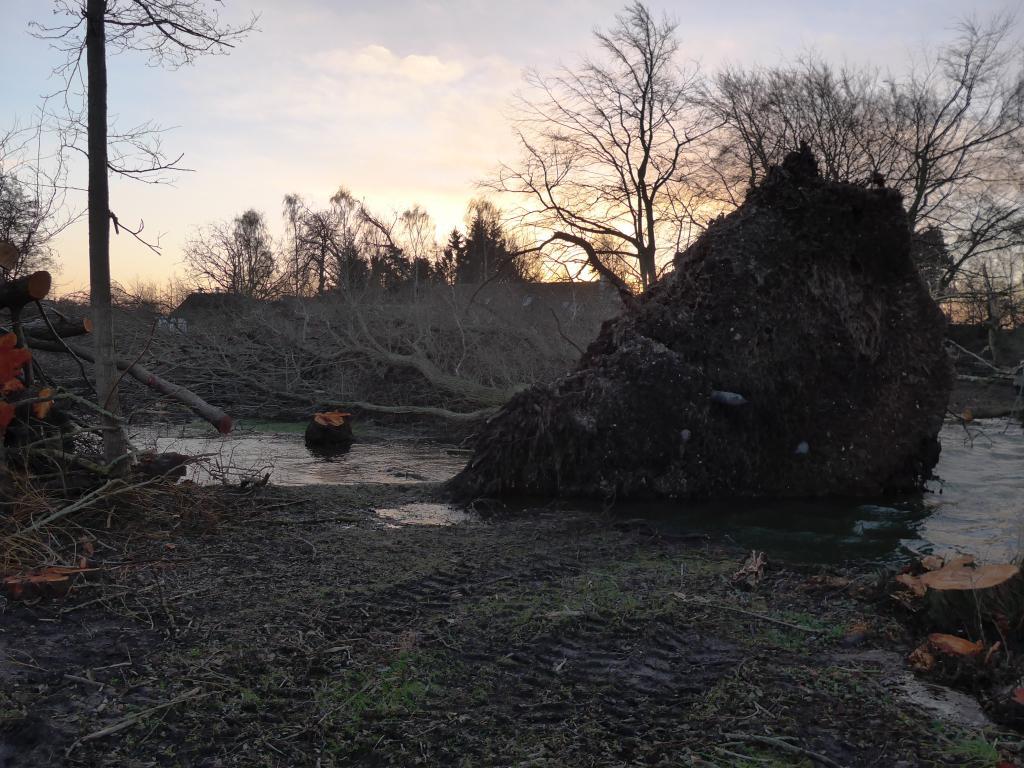 De to efterårsstorme i 2013 har haft drastiske konsekvenser for Aagaarden©Ravensbank Labrador Retrievers
