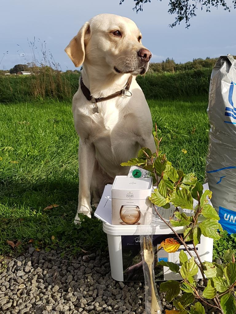 SEVCH DKSCH Ravensbank Brandy (Bamse) blev dagens bedste hund i sin debut på championatspor d. 23-09-2018.©Heidi Kristiansen