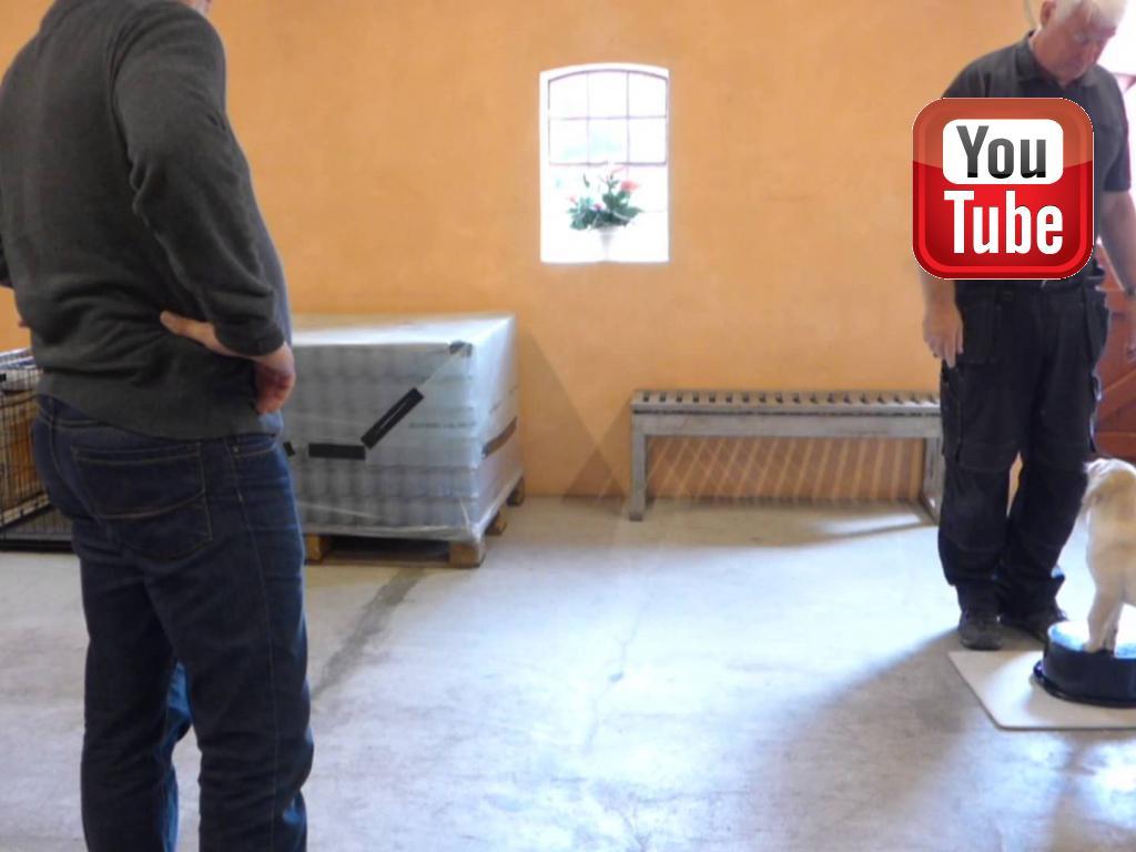 Uddrag af femte klikkertræningssession hvor Lars Jähger Petersen træner ni uger gamle Ravensbank Logan (Logan) frem mod den perfekte bagpartskontrol. ©Ravensbank Labrador Retrievers