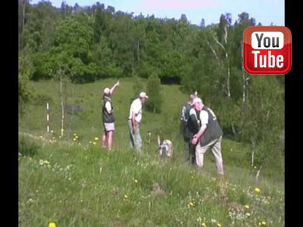 Tidemark Ivy (Ivy) at the Danish Team Championship in 2007 - it is Team Ivy to the right.©Ravensbank Labrador Retrievers