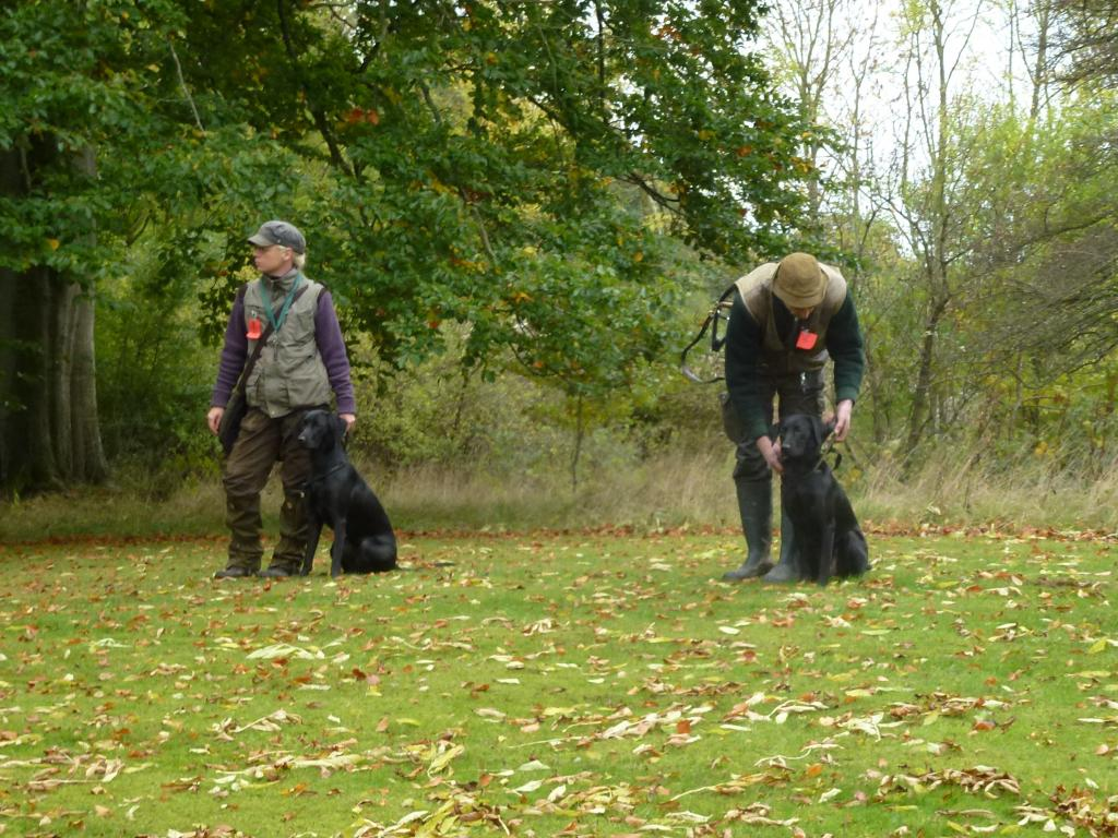 Step 3 at the unofficial Field Trial in October 2013. To the left it is Miss Anne Iversen with Ravensbank Donna (Bibs) and to the right it is Mr. Kurt Thorsen with Ravensbank Janet (Janet). ©Ravensbank Labrador Retrievers