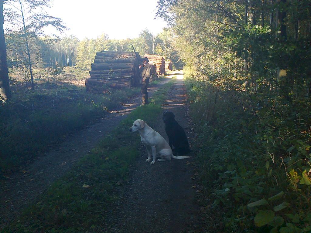 Jagtsæsonen kører. Forrest er det Tidemark Jill (Jill) og bag hende er Lobe´s Labrador Swift Victor.©Gert Müller