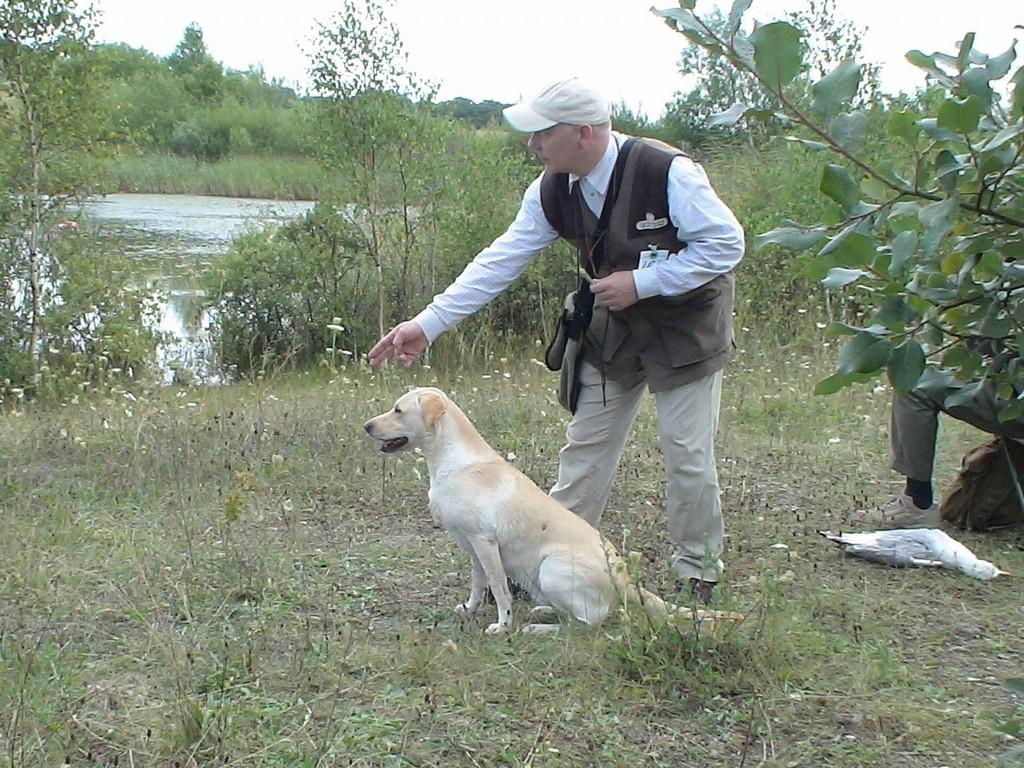 In the picture, I am lining up Tidemark Ivy (Ivy) for a blind at an official cold game test in Suserup near Sorø in August 2007. ©Henrik Jensen