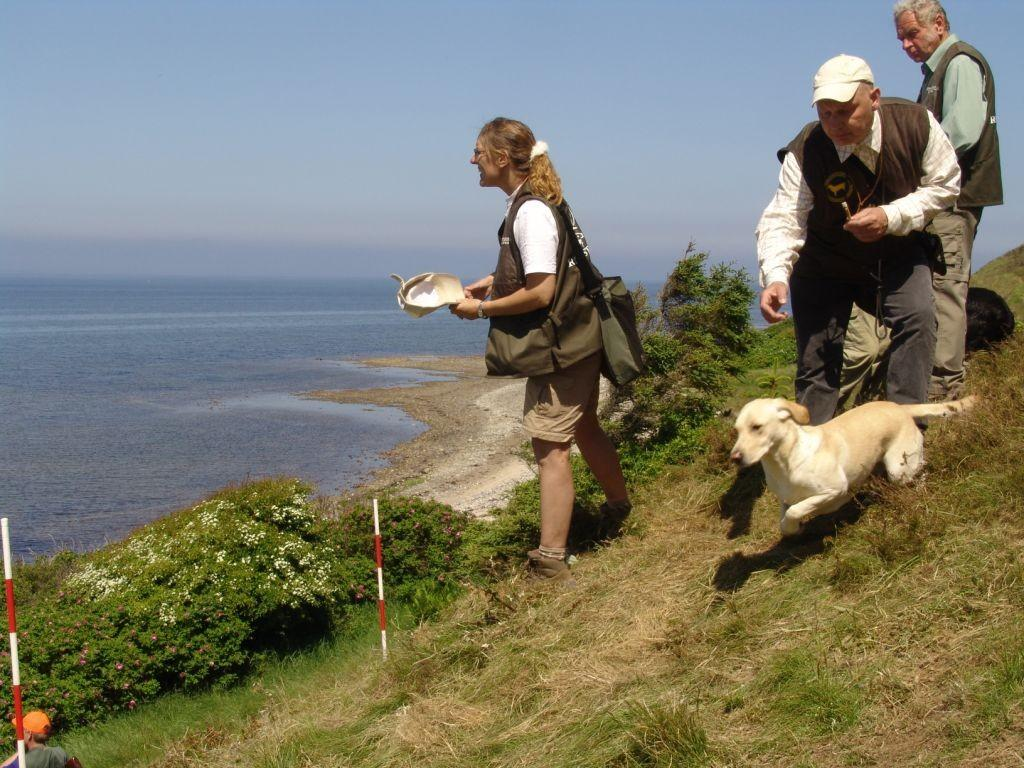 The Danish Team Championship 2006. Tidemark Ivy (Ivy) is lined up for a mark. To the left is Charlotte Rasmussen, and behind me our team captain, Gert Müller.©Ravensbank Labrador Retrievers