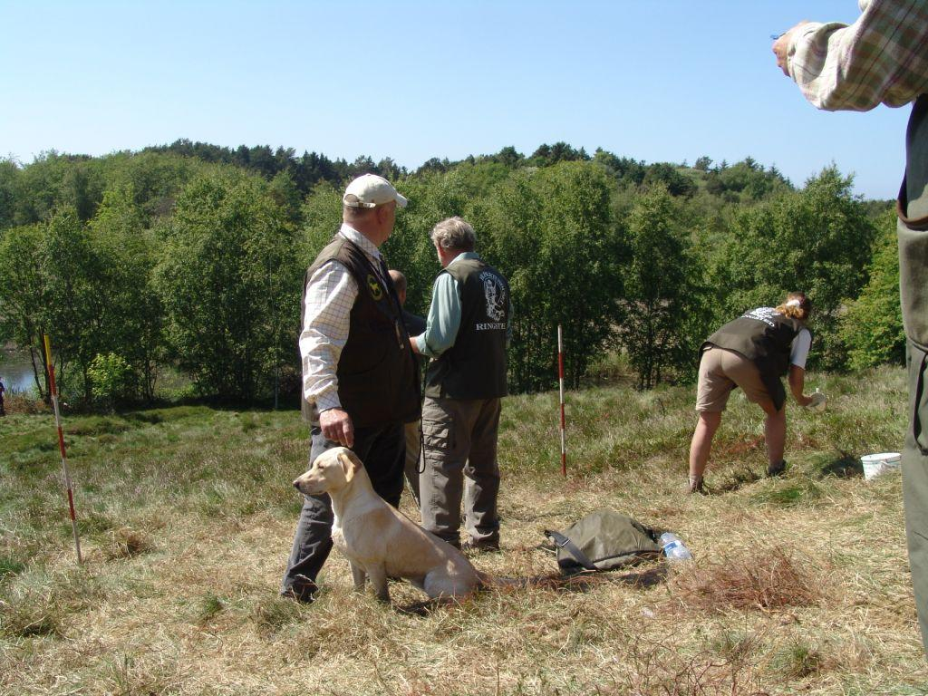 Even in tense situations, Tidemark Ivy (Ivy) is completely concentrated. In the picture, she is lined up for one of the last marks before receiving the bronze medal in the Danish Team Championship 2006. ©Ravensbank Labrador Retrievers
