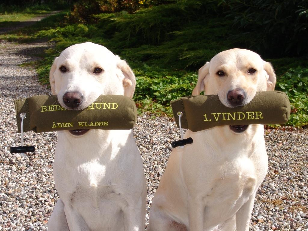 Mor og hvalp med præmiedummier fra C-prøve Tarup Davinde d. 8. september 2007. Til højre er mor, Tidemark Ivy (Ivy) som blev 1. vinder på dagen. Til venstre er Ravensbank Robin (Robin) på 12 måneder, der blev dagens bedste hund i åben klasse.©Ravensbank Labrador Retrievers