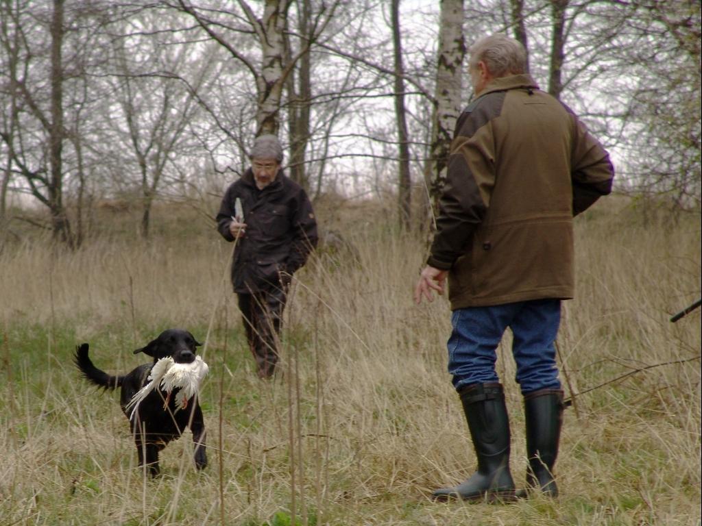 DKBRCH DKJCH NOJCH SEJCH NORDJCH 2EV2010 3UM2008 Ravensbank Swift (Swiffer) er på vej hjem til Gert Müller med sin vandmarkering i åben klasse under B-prøven d. 12. april 2008.©Ravensbank Labrador Retrievers