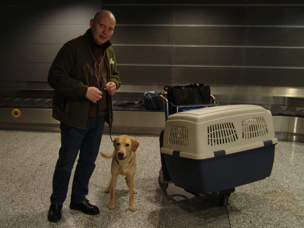 Here I am with a happy and confident Ravensbank Boss (Boss) after the flight to Finland on 6 March 2009. As always, calm and quiet. ©Ravensbank Labrador Retrievers