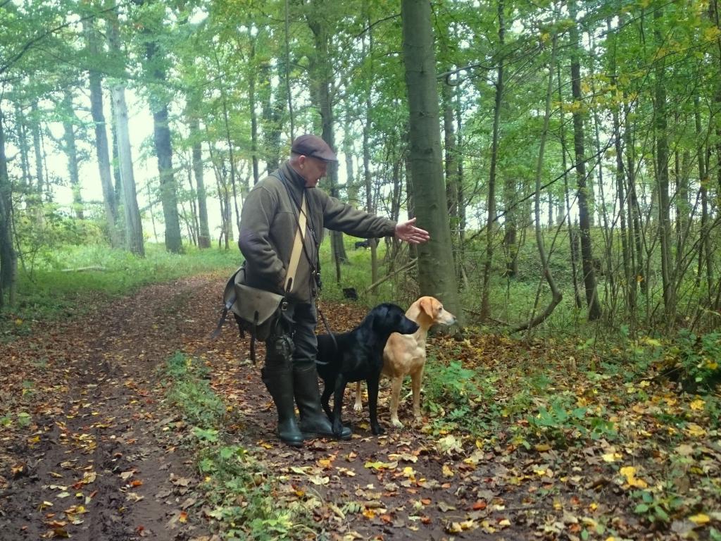 Ude at apportere en efterårsdag i 2015. Den sorte hund er Ravensbank Bob (Bob) og den gule er Ravensbank Wagtail (Waggie).©Anne Kjær Iversen