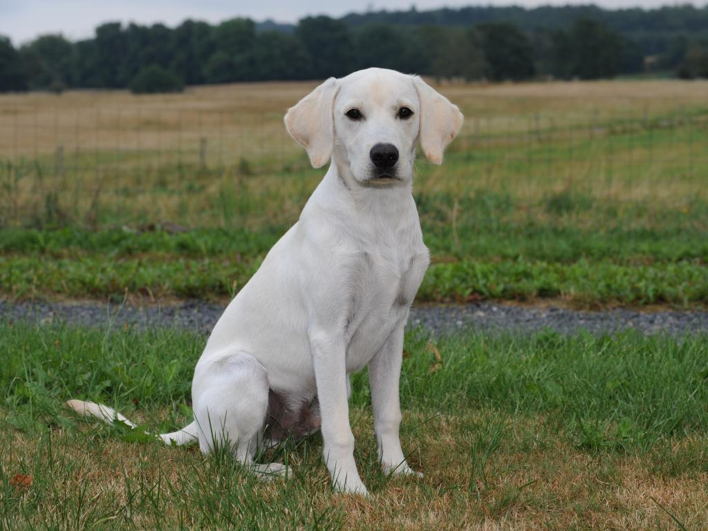SEVCH DKSCH DKSCH(V) Ravensbank Brandy (Bamse) in August 2014, where he is just five months old. ©Heidi Kristiansen