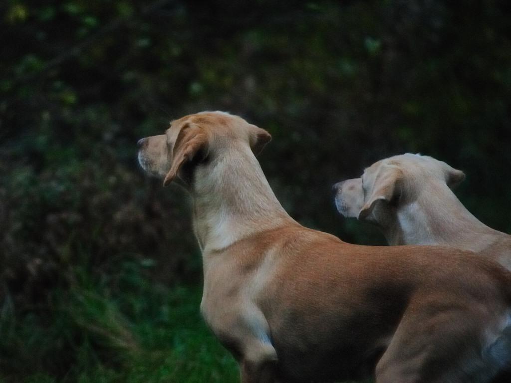 Ravensbank Wagtail (Waggie) og Tidemark Ivy (Ivy)©Margot Donkersloot