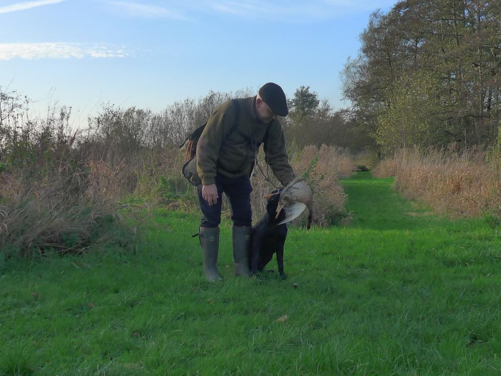 Ravensbank Biscuit (Bibi) retrieves her first duck, and delivers to hand. She is nine months old. ©Ravensbank Labrador Retrievers