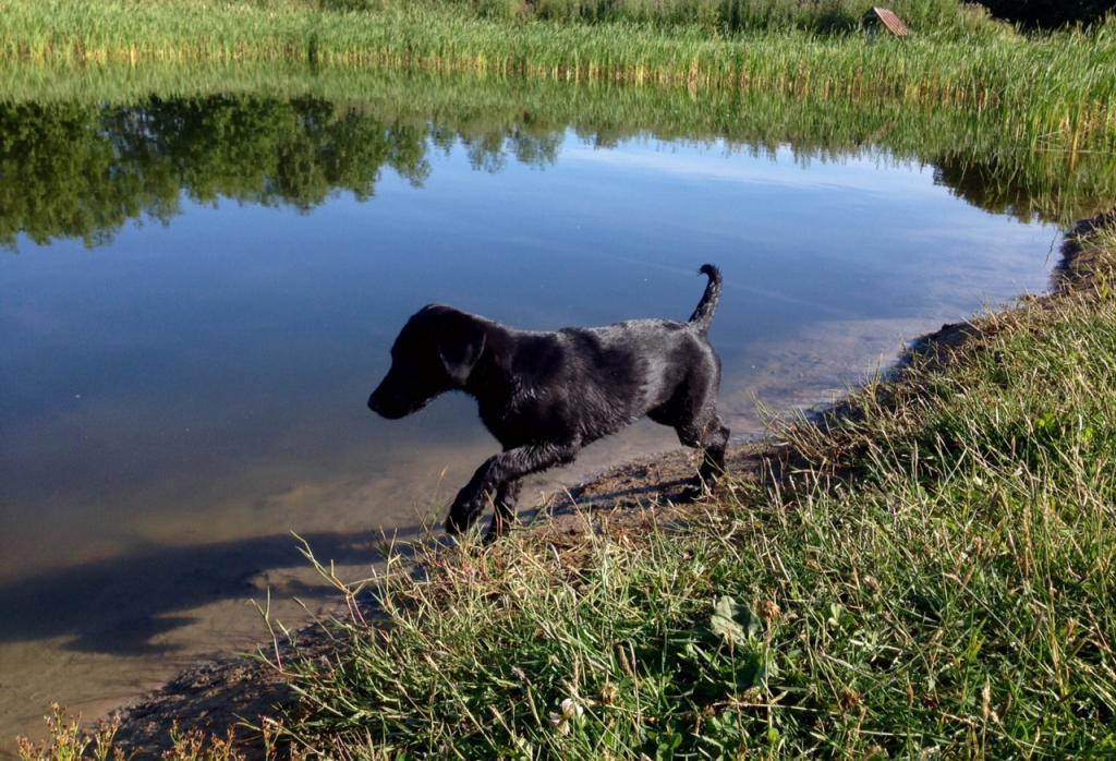 Ravensbank Etta (Etta) leger ved vandet 10 uger gammel©Ann Schmidt