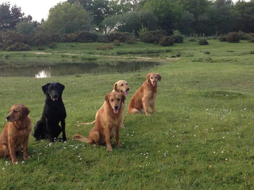 Fra Skinner's World Cup Retriever Event 2012.Hunde fra det franske hold. Den flotte sorte labrador er FRFTCH Ravensbank Sir Lancelot (Lance).©ASUR Retriever