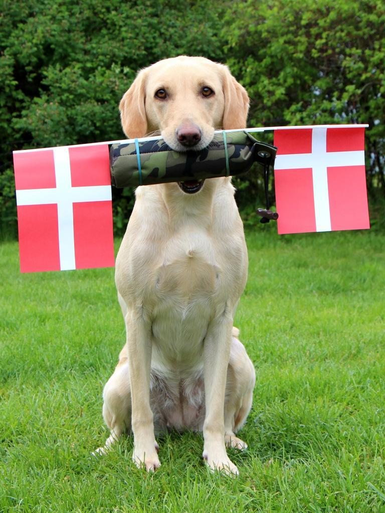 DKRLCH Ravensbank FT (Pink) flager for sine hundevenner fra kennelen.©Anne Winkel