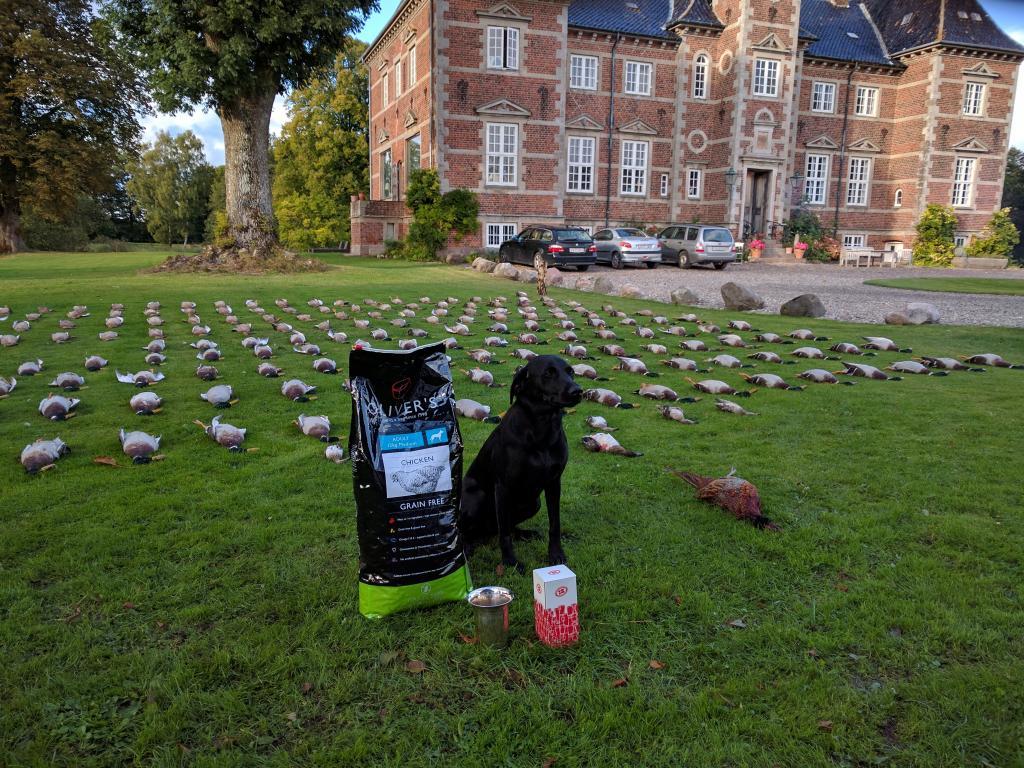 Ravensbank Ice (Maggie) er en træt vinder af prøven og dermed den bedste hund fra Fyn på AC-prøve på Ruggaard d. 09-10-2016.©Lobke Jacoliene Bloten