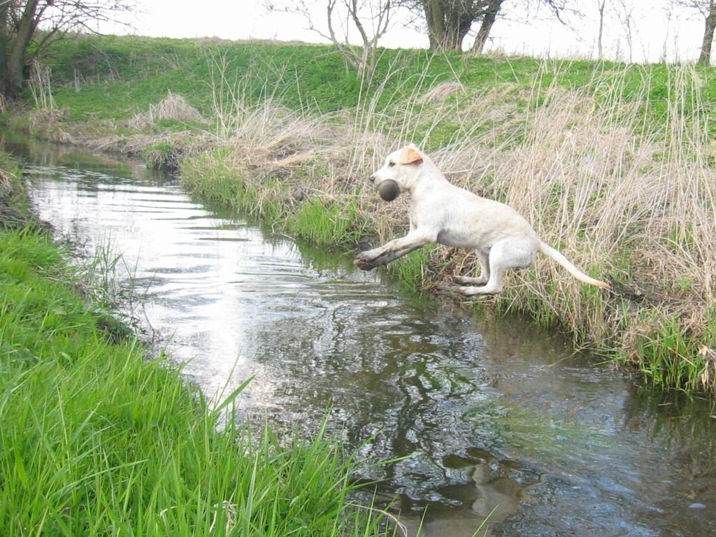 A fantastic photo of six months old Tidemark Jill (Jill) jumping over the stream. Will she get over in one jump? ©Gitte Nini Erichsen