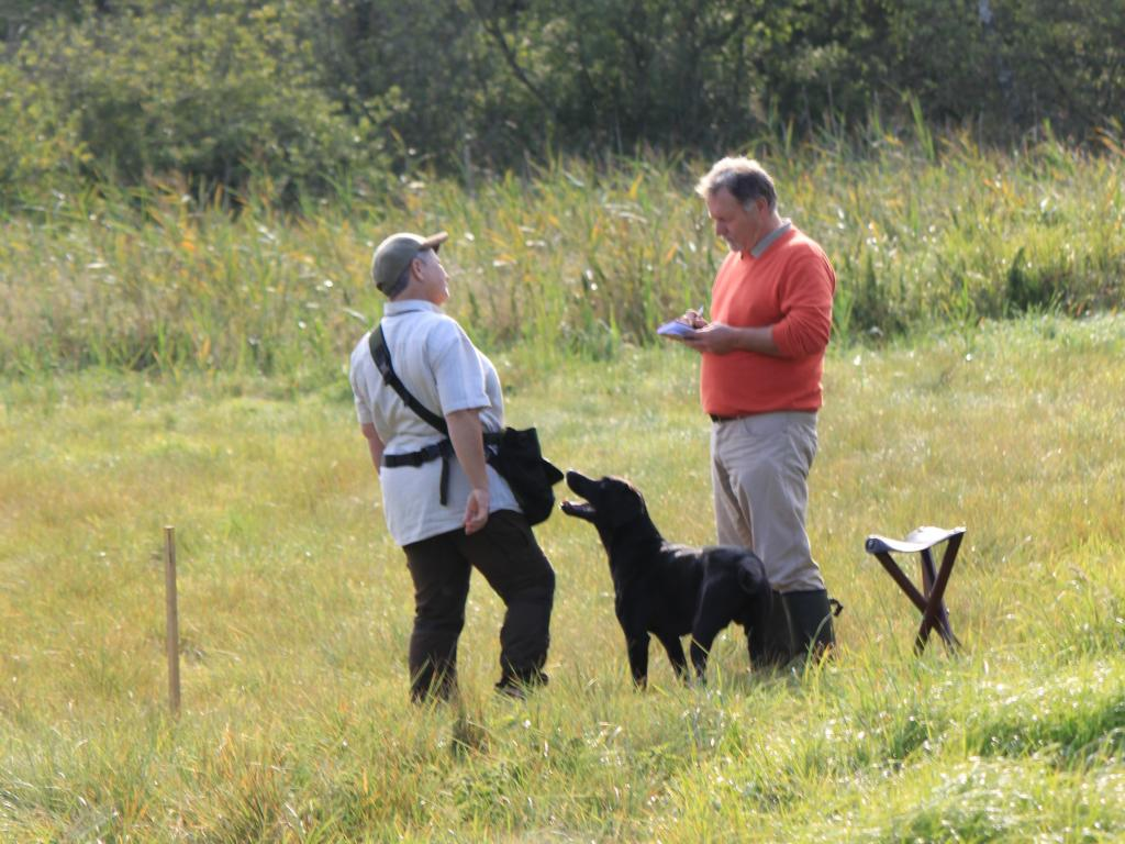 Ms. Helga Thorstein and 2UM2014 Ravensbank Floyd (Lewis) receiving their comments from Judge Danny Frazer at the Young Dogs\' Cold Game Championship 2014. ©Hans Frederik Kristiansen