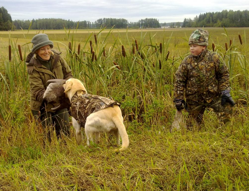 It is Canada goose on the menu in the family Salo. It is Mervi Salo who get's the big bird from FI KVA, SE KVA Ravensbank Tip (Tipi) and son Kalle who holds the first bird retrieved by Tipi that day.©Jouni Salo