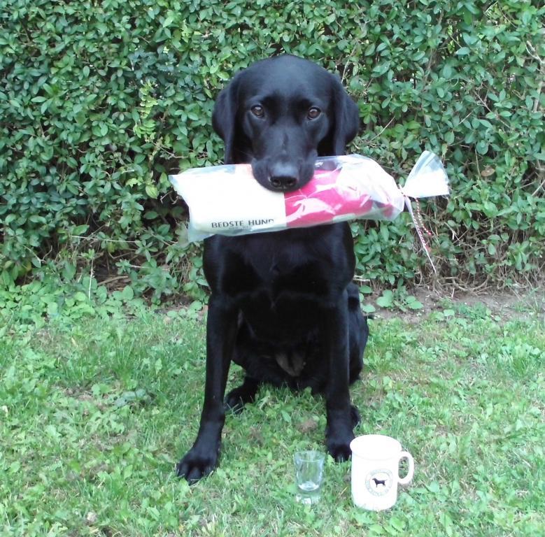 Ravensbank Mint (Minte) dagens bedste hund på begynderklasse C-prøve d. 22.09.2013.©Helle Voigt