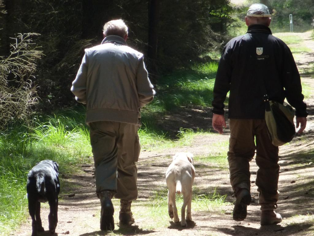 From the Cold Game Championship 2009. The dogs are getting tired after the walking up on a very hot day, and so are the handlers. Here Gert Müller and myself are already discussing proper tactics for the last step.©Ravensbank Labrador Retrievers