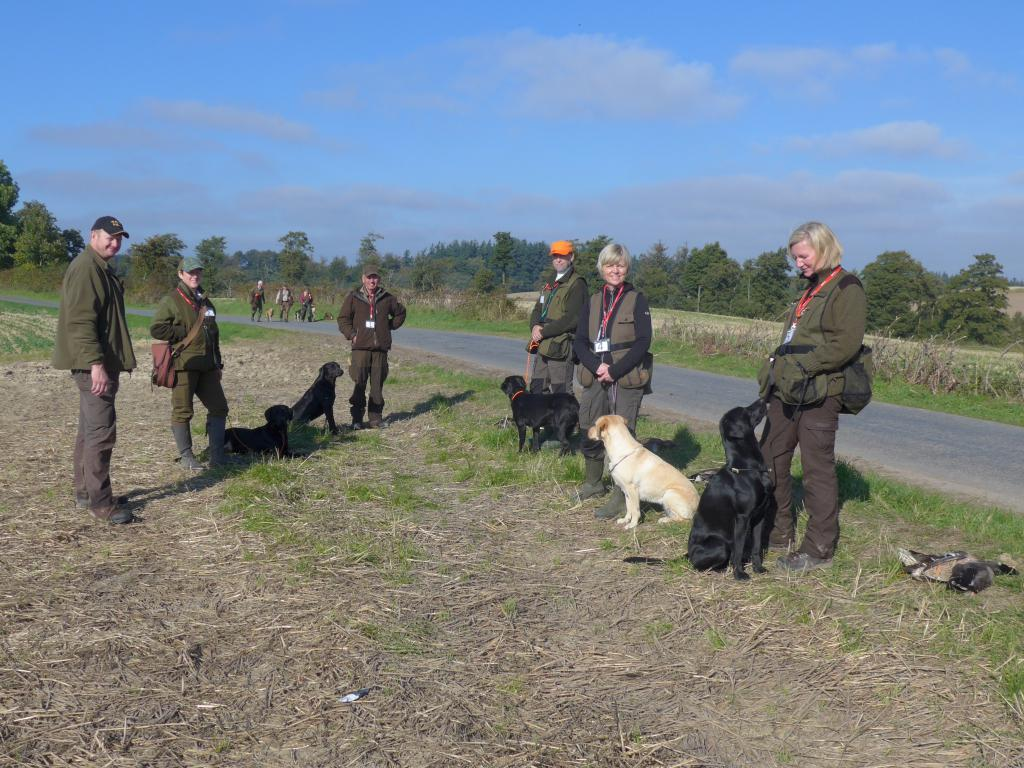 Group of inexperienced dogs at the unofficial FT on 3 October 2015. From the left it is assistant steward Mr. Jan Jensen, Ms. Berith Monrad with Batmoors\' Argus Filch (Felix), Mr. Carsten Mindegaard with Geronimo\'s Scottish Anton (Anton),  Mr. Kim Havkrog with Scotsgap Douglas (Douglas), Ms. Helle Stockfisch with Brown Hunt\'s Spica (Spica) and rightmost it is Ms. Lene Bak with Teddy (Enzo).