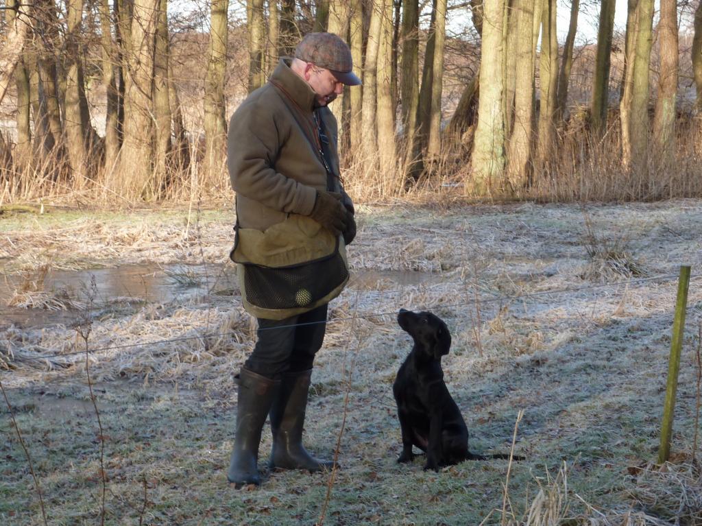 """""""Træning"""" af den unge hund handler i mine øjne om at bygge fundamentet for et godt samarbejde helt fra bunden. God kontakt til hunden er helt essentiel. Her er det Ravensbank Jock (Jock) fire måneder gammel.©Ravensbank Labrador Retrievers"""