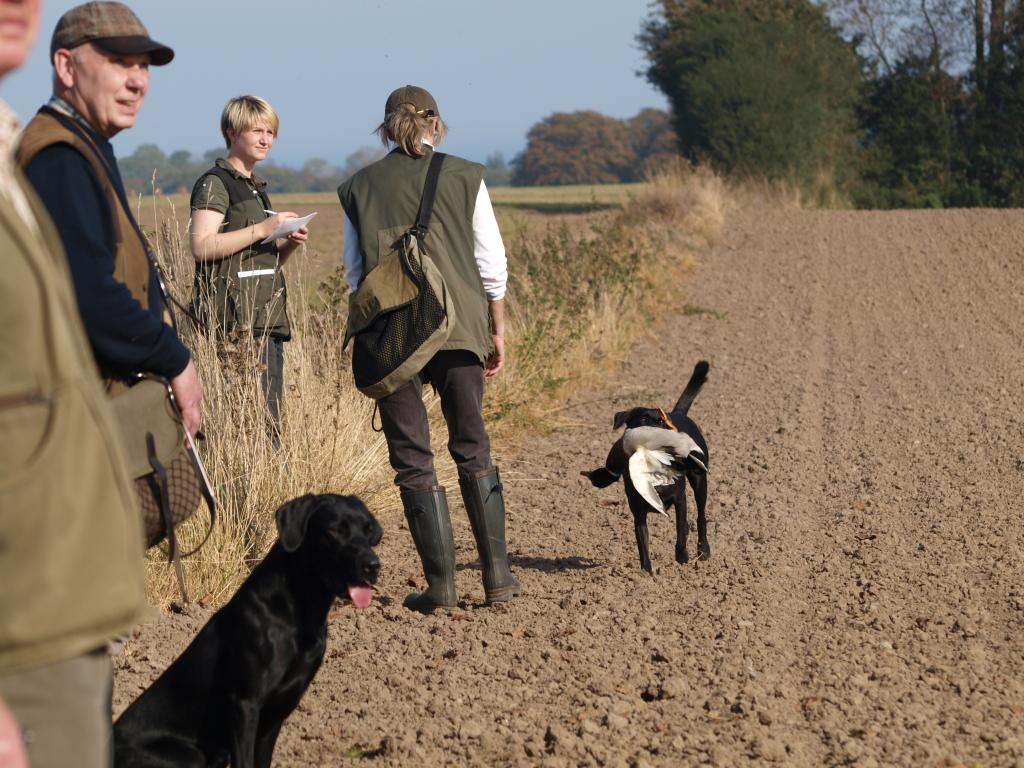 Ravensbank Flo (Flo) approaching Annelise to deliver the retrieved duck. Note how the judge left in the picture, myself, the trial assistant, Jock and in fact also Flo are all marking the next bird down to the right behind the photographer.©Marie Koefoed-Toft