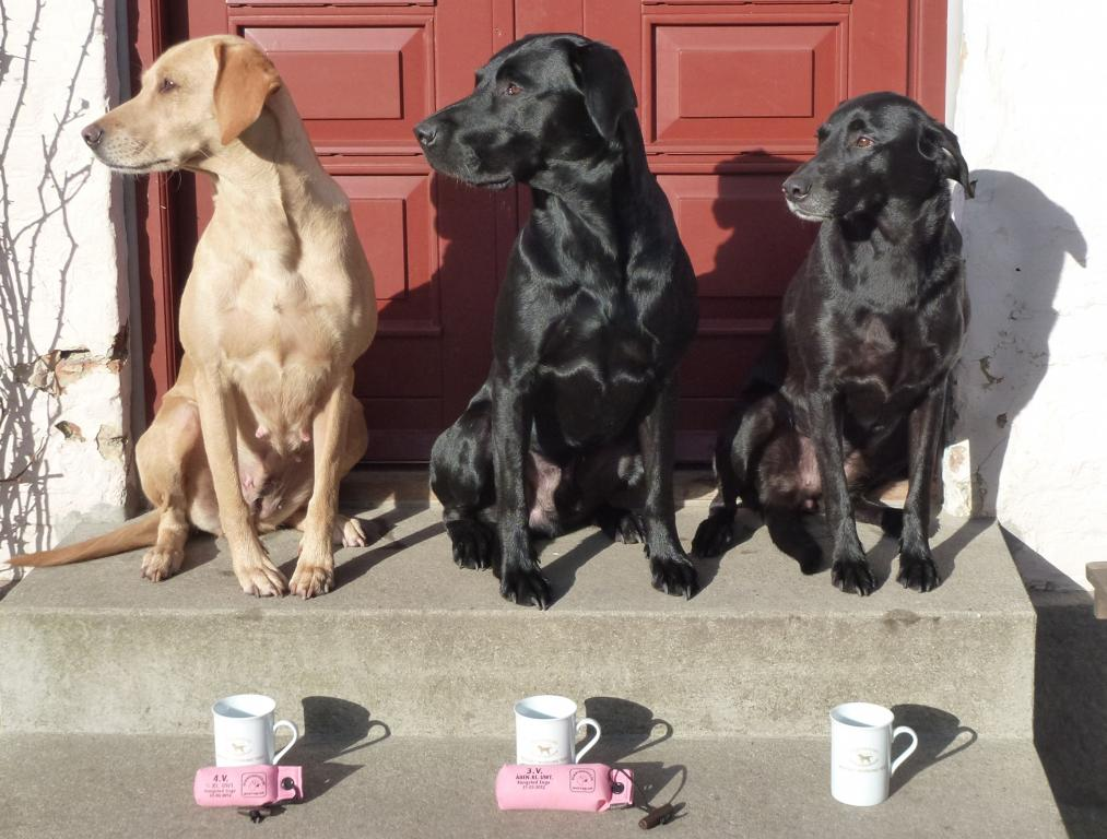 After unofficial Working Test on 31 March 2012. To the right Ravensbank Flo (Flo), 6WT in novice class in the middle, Ravensbank Jock (Jock), 3WT intermediate class, and to the left Ravensbank Wagtail (Waggie), 4WT in open class. ©Ravensbank Labrador Retrievers